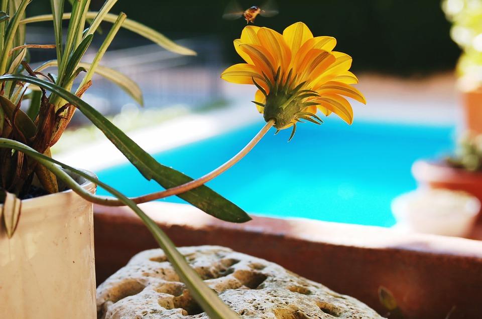 Comment choisir une piscine pour son jardin ?