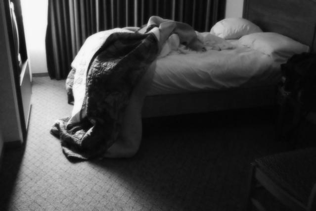 Les différents types de solutions contre les punaises de lit