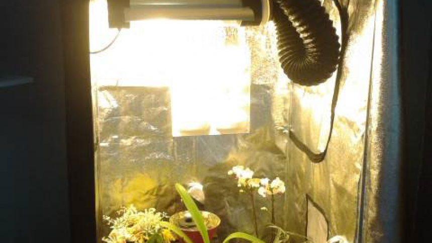 Jardiner dans la maison avec une chambre de culture, home box ...